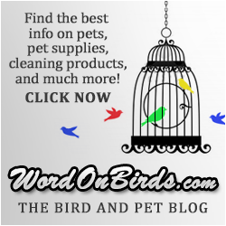 WordOnBirds.com